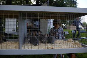 Sarpsborg Kaninavlslag med mange nydelige kaniner, i alle størrelser, som barna får lære om, mate og kose med. Foto Gate Jacobsen.