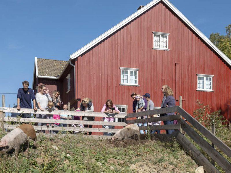 Grisene kosa seg i bingen utenfor Narvestad