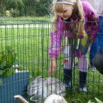 Kaninkosing på Barnas Dag 2011. Foto Tom Lauritsen.