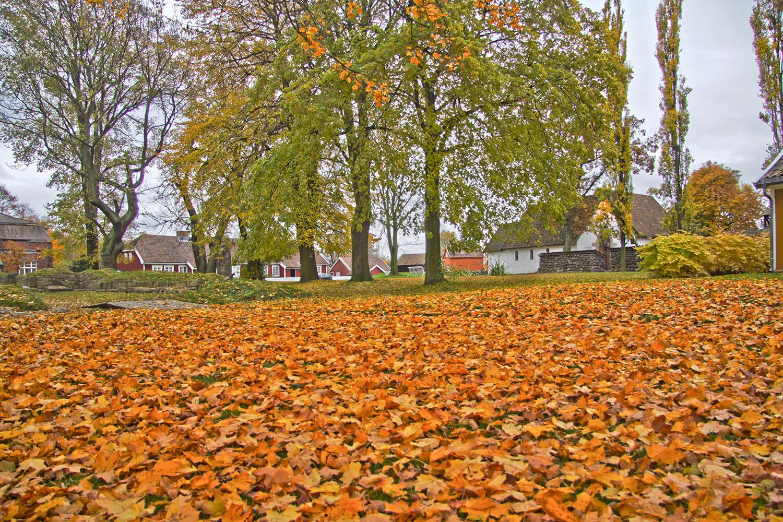 Høst på Borgarsyssel. Foto: E. Nordenhaug